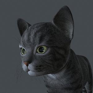 kitten cat model