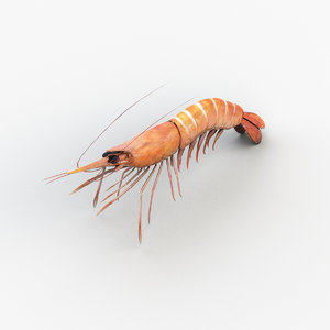 3D cooked shrimp