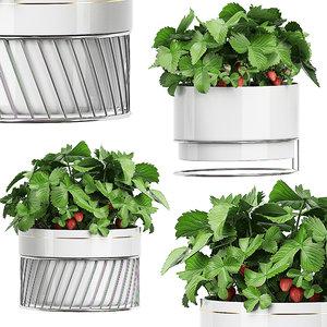 3D potted plants set 59 model