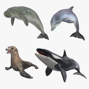 3D marine mammals 3