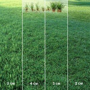 3D lawn grass plant