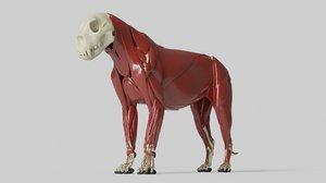 3D sculpture lion anatomy skeleton model