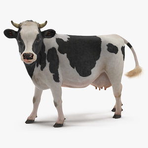 eating cow animal rigged 3D model