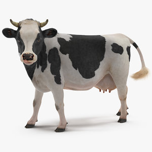cow walking animal rigged model