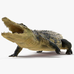 crocodile attack animal rigged 3D model