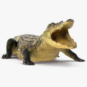 3D crocodile eating animal rigged