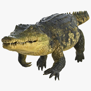 3D crocodile swiming animal rigged