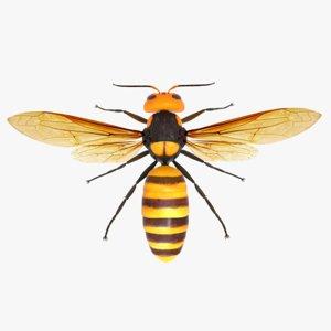 3D asian giant hornet