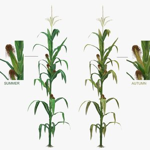 3d low-mid corn