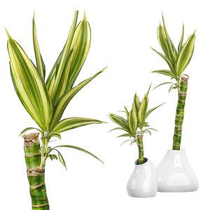 potted plants 63 3D model