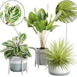 3D potted plants 60
