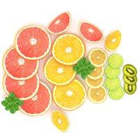 Citrus Slice Collection Realistic