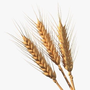 set wheat spikes 3D model