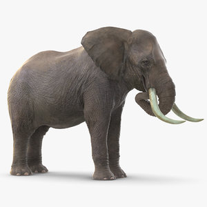 3D model elephant eating mammal animal