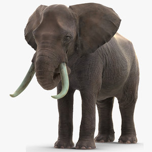 elephant eating mammal animal 3D model