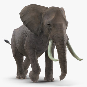 3D elephant running animal rigged model