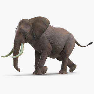 elephant running animal rigged 3D model