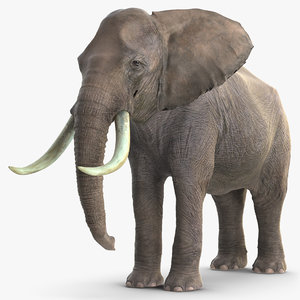 3D elephant waiting animal rigged