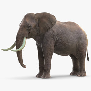 elephant waiting animal rigged 3D