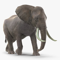 Animated Elephant Walking Rigged for Cinema 4D