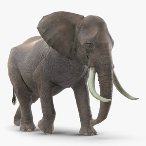african elephant walking animal 3D model