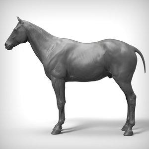 horse base realistic model