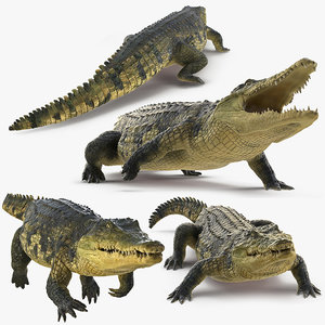 3D model crocodile animals