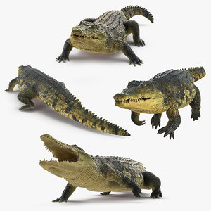 3D crocodile animals