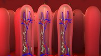 Internal intestine and worm egg Medical animation