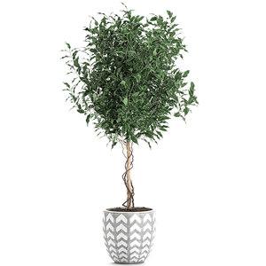 decorative trees interior pots 3D