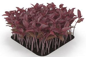 red amaranth model