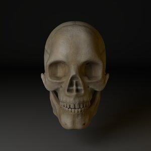 3D cranium model