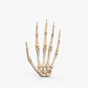 hand bone 3D model