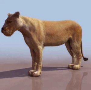 render rigged lion family 3D model