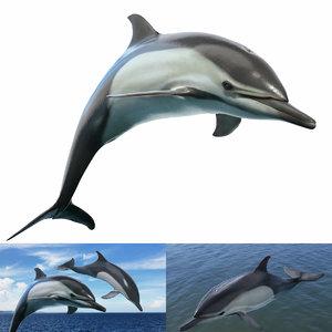 3D marine rigging animation delphinus