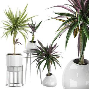3D potted plants 64 model