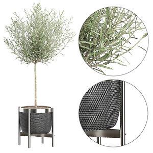 olive tree pot 67 3D model