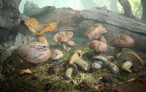 3D model ready suillus fungi mushroom