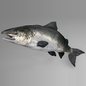 3D model salmon rigged l738 animate
