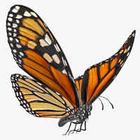 Animated Flying Monarch Butterfly Rigged for Cinema 4D