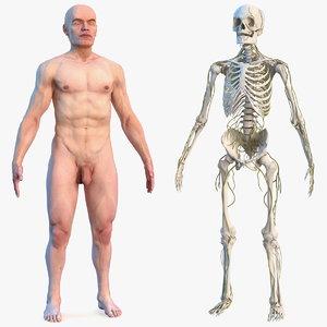3D male skeleton nervous skin human model