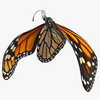 Animated Flight Monarch Butterfly Rigged for Cinema 4D