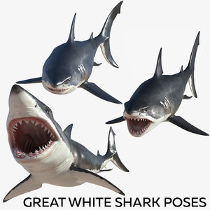 great white shark poses 3D model