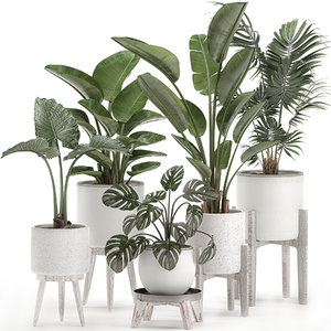 decorative plants interior white 3D