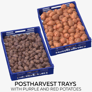 postharvest trays purple red 3D