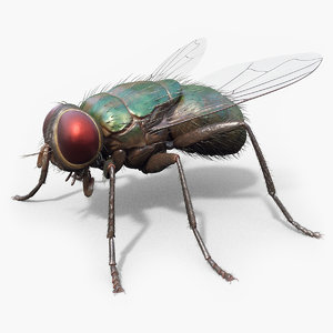 housefly realistic wings 3D