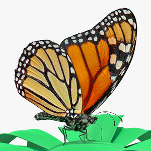 monarch butterfly sits flower model