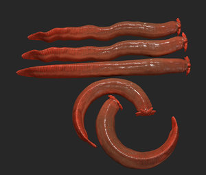 hagfish fish 3D model