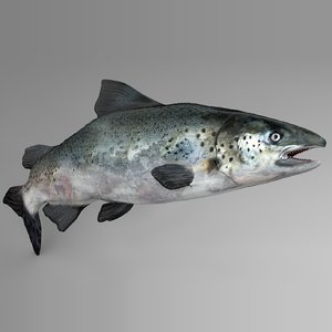 3D salmon rigged l741 animate model