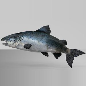 salmon rigged l740 animate 3D model